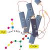Industrielle Herstellung komplexer Glycoproteine